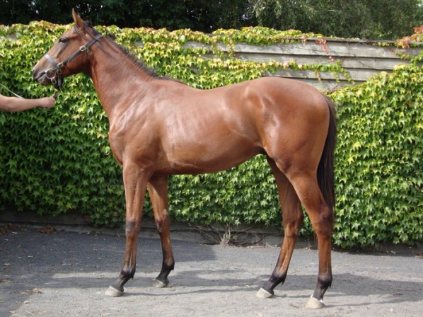 vinales-2012-yearling-photo-taken-14th-august-2013