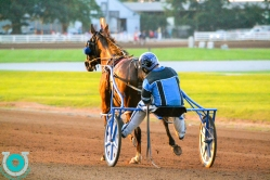 The Red Mile Horses
