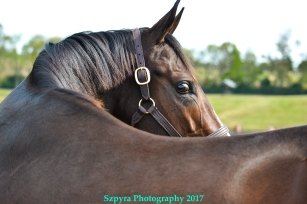 Songbird retires to a great life