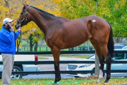Queen Blossom (IRE) stands proud and elegant