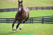 Songbird in her Taylor Made paddock