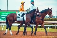 Telekinesis 2018 Lexington Stakes