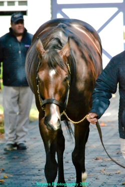 Classic Empire at Coolmore Ashford
